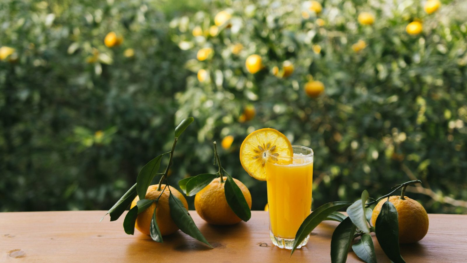 Freshly squeezed orange juice at the cafe
